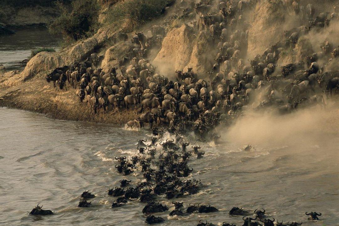 Wildebeest Migration in Masai Mara Game Reserve