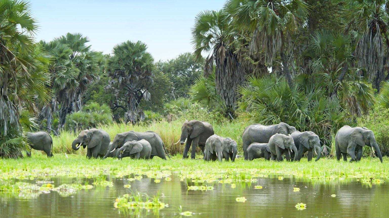 Selous Game Reserve, Wildlife Safaris, 7 Days Tanzania
