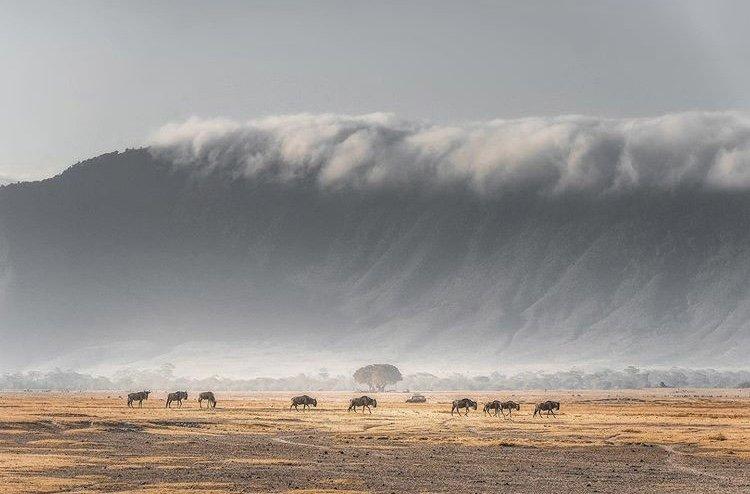 Ngorongoro Crater Tanzania Safaris
