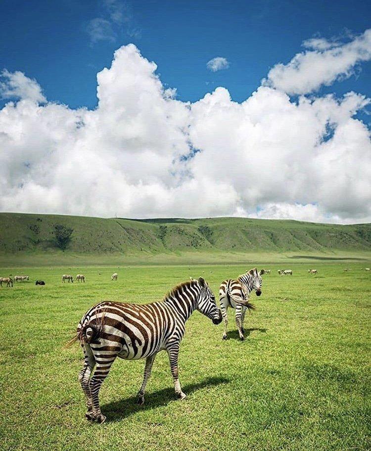 Ngorongoro Crater. 3 Days Tanzania Tour, Tanzania Safaris