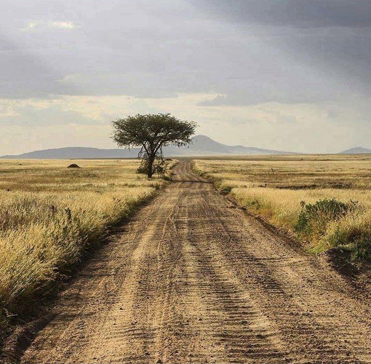 Serengeti national park Tanzania. Road Trips