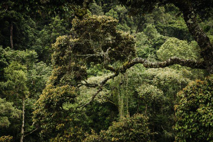 Nyungwe National Park Rwanda. Land of A thousand Hills