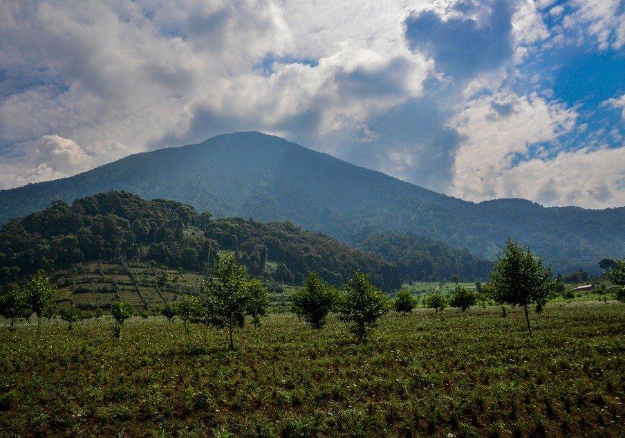 Volcanoes National Park Rwanda. Gorilla Safaris