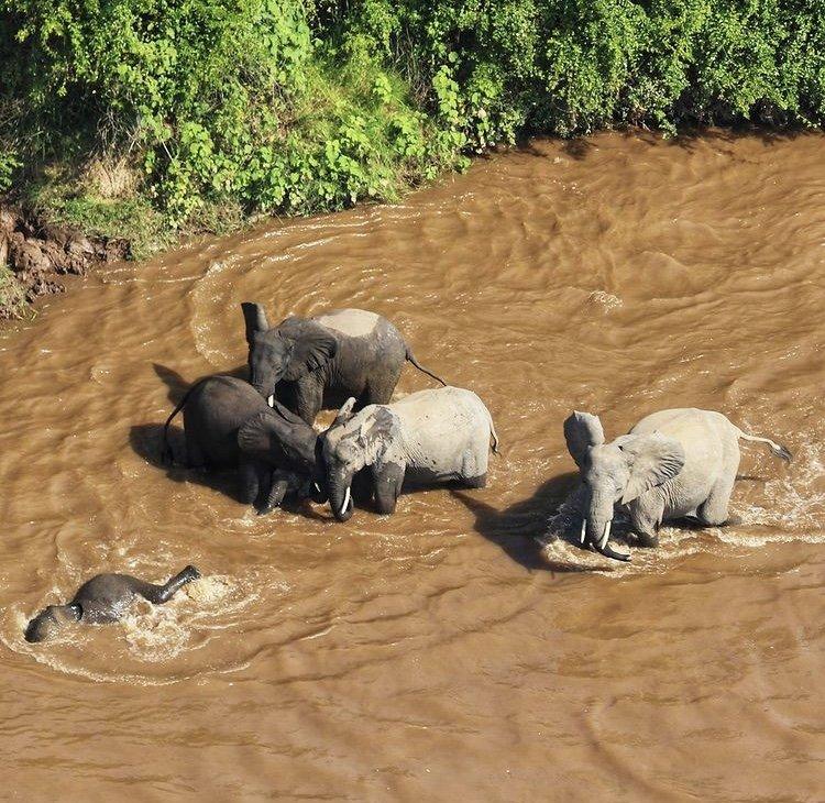African Elephants in Virunga National Park. East African Tour