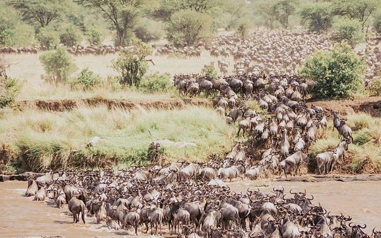 Tanzania Wildlife Safari- Serengeti