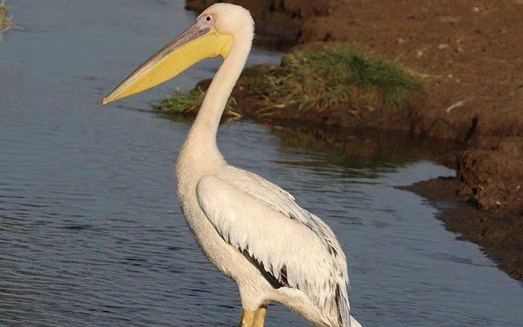 Pelican Lake Manyara Tanzania. Tour destinations