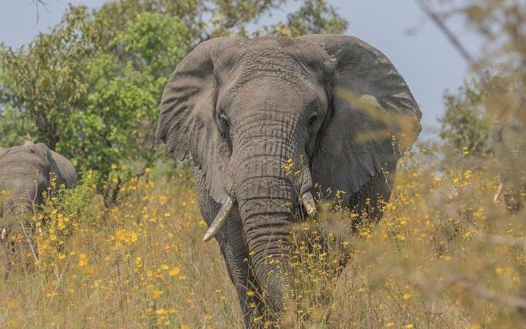 Elephant in Akagera National park Rwanda. Safari Game drives