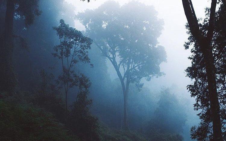 Nyungwe National Park. Rwanda Safari Journeys