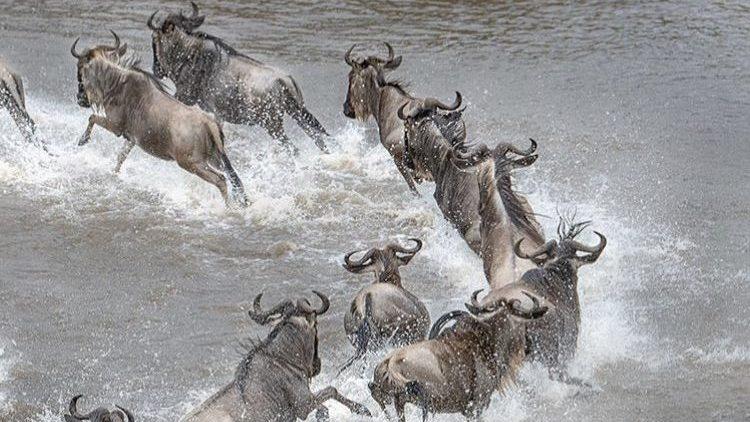 Wildebeest Migration Visit East Africa. 3 Days Masai Mara
